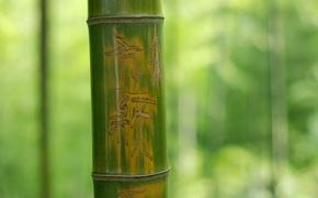 Картинка Макро, Дерево, Зеленый, Бамбук, Ствол, Фон, Надпись, Nature, Иероглифы