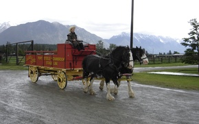 Картинка British Columbia, wagon, Horses, B.C., cranbrook, fort steele