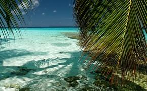Обои море, небо, вода, прозрачность, природа, пальмы, листва, мальдивы, индийский океан, Южный Мале, Kaafu