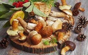 Картинка стол, красные, природа, шишки, ням-ням, белые, ягоды, wallpaper., подберезовики, размытость, боке, еда, рябина, грибы, осень