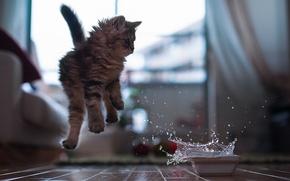 Картинка вода, миска, котёнок