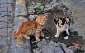 Картинка взгляд, котята, малыши, парочка, уличные