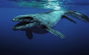 Обои монстр, под водой, морской обитатель