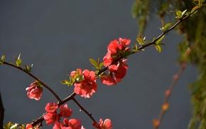 Картинка весна, красные, Цветочки, red, flowers, spring