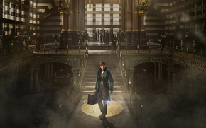 Обои USA, Harry Potter, witch, magic, spell, NY, Scamander, Magical Congress of the United States of ...