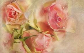 Картинка капли, цветы, розовый, розы, текстура, бутоны