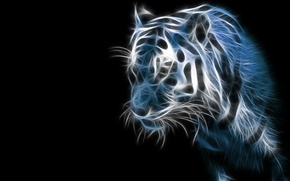 Обои тигр, темно, черный фон