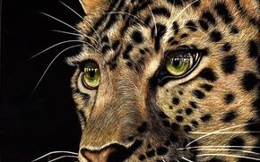 Картинка взгляд, морда, животное, хищник, леопард, черный фон, зеленые глаза