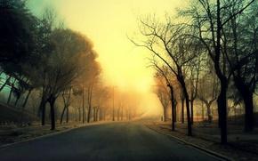 Картинка дорога, деревья, туман, аллея