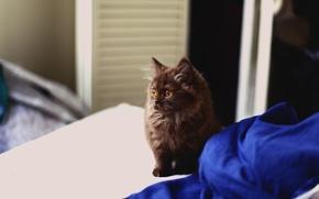 Картинка котенок, шерсть, пушистый, смотрит