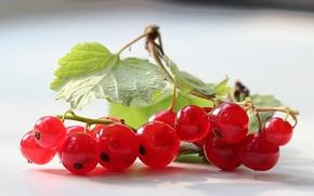 Картинка листья, ягоды, красная, смородина