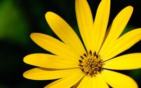Картинка макро, цветы, желтый, фон, обои, лепестки, широкоформатные, полноэкранные, HD wallpapers, цветочек, широкоэкранные