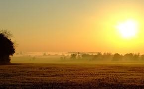 Картинка туман, солнце, поле