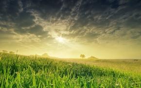 Обои поле, небо, солнце, природа, весна