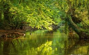 Картинка Франция, Осень, Озеро, Fall, France, Autumn, Lake, La Sarthe, Сарта