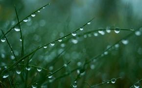 Обои роса, зеленый, Капли