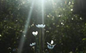 Картинка Макро, Цветы, Белый