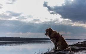 Картинка река, друг, собака, пёс