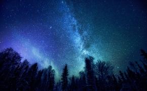 Обои лес, космос, звезды, деревья, Млечный Путь, мистерия