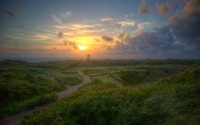 Картинка море, небо, трава, солнце, облака, цветы, рассвет, побережье, Дания, горизонт, Jylland