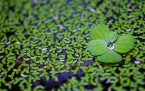 Обои макро, вода, лепестки, зеленые, капля