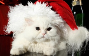 Картинка кошка, праздник, белый, перс, шапка, мех, новый год, пушистый, санта клаус, шерсть, кот