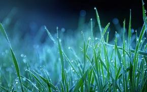 Картинка трава, капли, синий, природа, роса, голубой