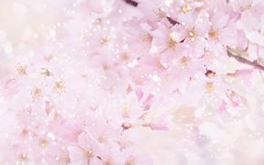 Обои цветы, природа, сакура, розовый, лепестки, цветение, вишня, весна