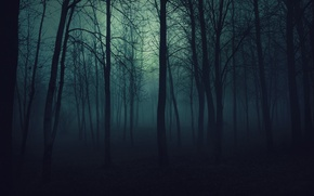 Обои деревья, туман, тьма, Лес