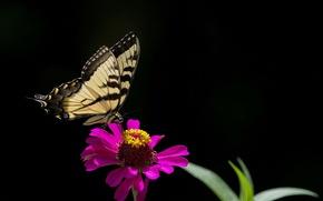 Обои цветок, бабочка, природа