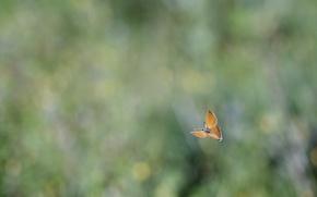 Обои размытость, бабочка, блики, полет, фон
