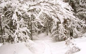 Картинка зима, лес, снег, тропа, мороз, forest, Winter, snow, path, frost