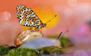 Картинка макро, бабочка, улитка, боке