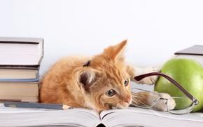 Картинка кошка, кот, книги, яблоко, рыжий, очки, лежит, карандаш