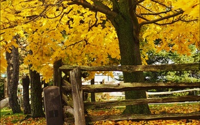 Картинка trees, autumn, leaves, fence, fall, foliage, wood fence, fall colors, autum colors