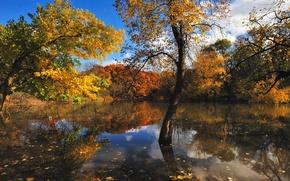 Картинка осень, деревья, природа, озеро