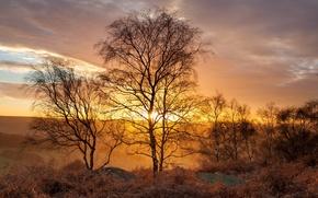 Обои golden birch trees, gardom's edge, peak district, uk, landscape, light