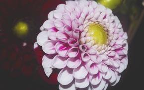 Картинка цветок, макро, цветы, природа, flower, flowers, цветочный, цветочек, красивый цветок, цветок розовый