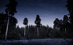 Картинка Природа, Ночь, Лес, Мрак