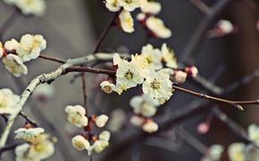 Картинка Дерево, Весна, Сакура, Цветение