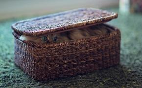 Картинка глаза, кот, коробка, спрятался