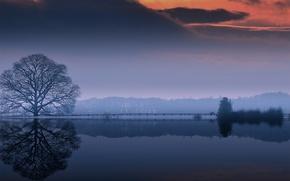 Картинка вода, облака, отражение, дерево, крона, оезро