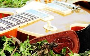 Картинка Музыка, Гитара, Music, Guitar, Gibson, LesPaul, Goldtop