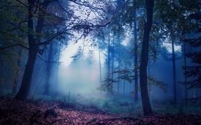 Картинка лес, туман, листва, Осень, сумерки, autumn, leaves, fog, fall