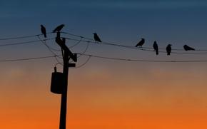 Картинка птицы, провода, столб