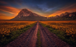 Картинка дорога, поле, небо, горы