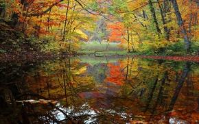 Картинка осень, лес, деревья, озеро, пруд