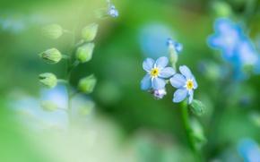 Картинка поле, трава, цветы, растение, лепестки, луг