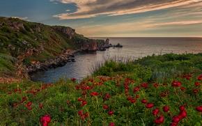 Обои цветы, море, пейзаж, природа, небо, облака, закат