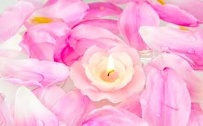 Обои цветы, лепестки, свеча, розы, розовые